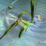 蜻蜓点水(单曲)详情