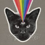 Black Cat详情