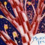 一棵开花的树详情