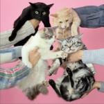 猫とアレルギー详情