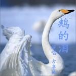 鹅的泪 (单曲)详情