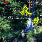 台湾的森林详情