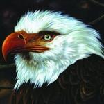 The Hawk Is Howling详情
