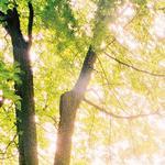 Leaves详情