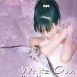 White Owl 白色猫头鹰