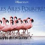 Les Ailes Pourpres 红色翅膀:火烈鸟故事详情