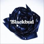 Blackbud详情