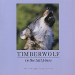 Timberwolf In Tall Pines详情